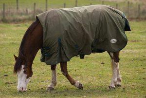 horse-blanketing-service
