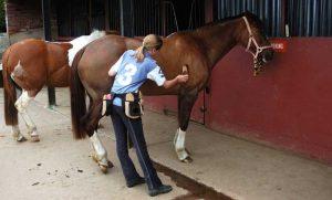 horse grooming service in Wilsonville, OR